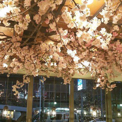 Starbucks Cherryblossom OSAKA Japan スタバ 大阪 * ……スタバでお花見🌸 *