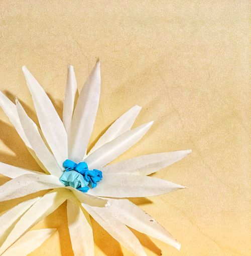 White paper flower on pale background IMography Close-up Flower Plant Nature Flowering Plant No People