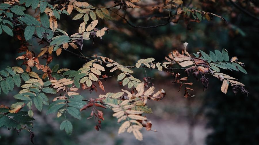 Autumn colors Autumn Leaves Backgrounds EyeEm Selects Plant Growth Tree Plant Part Leaf Beauty In Nature Autumn Nature Focus On Foreground Branch Tranquility Close-up Forest Green Color Selective Focus Leaves No People Outdoors Day Land