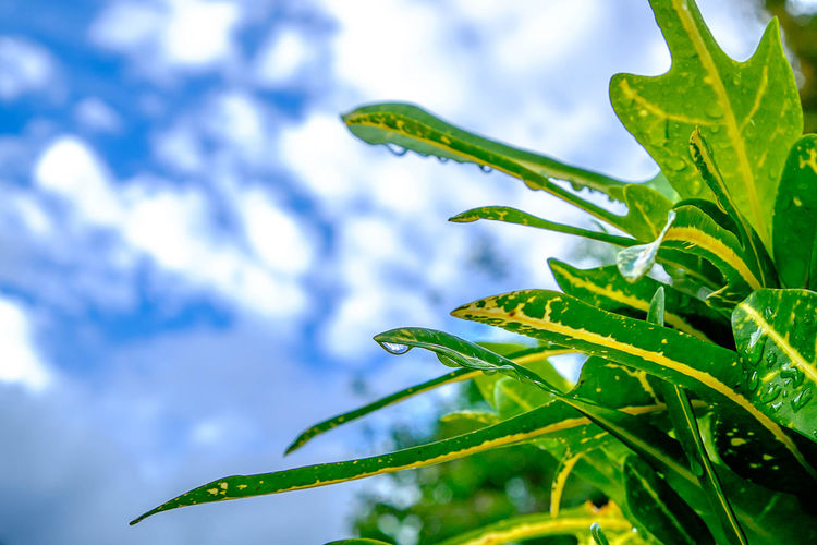 Close-Up Of Wet Plant Against Sky