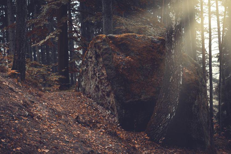 Dwarf rocks in