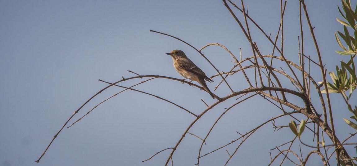 Animal Wildlife Aves Bird Of Prey Birds Birds_collection Free No People Oiseau Oiseaux One Animal Pajaros