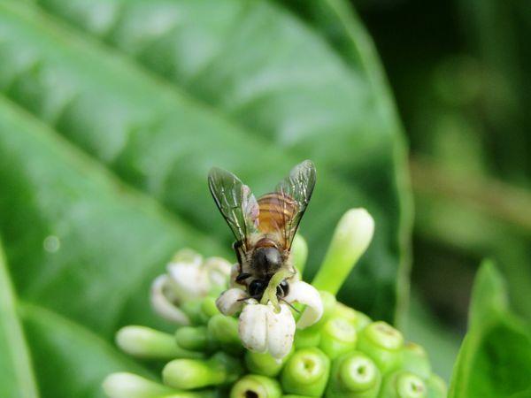 Sryuppp ahh..lezatnya madu ini 😍💕 Honest HoneyBee Animal_collection Animal Photography Welcome To East Sumba Eyem Gallery Sumba Timur EyeEm Indonesia Nature On Your Doorstep Bee 🐝 Animal Portrait