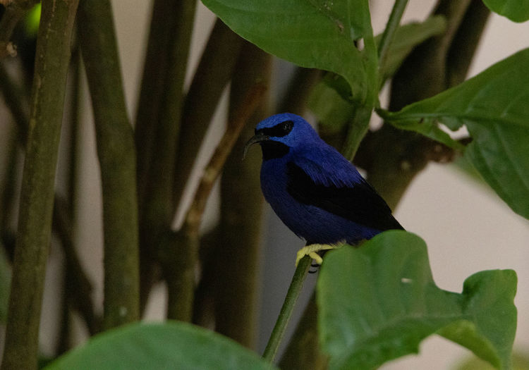 Close-up of bird perching on leaf