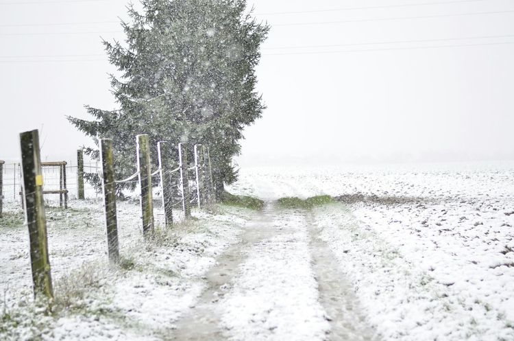 First Snow Winter Trees Nature