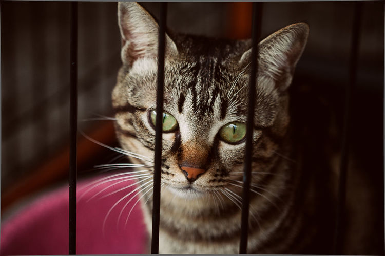 Lost in Houtong cat village, New Taipei City Animal Themes Cat Village Close-up Day Domestic Animals Domestic Cat Feline Houtong Cat Village Indoors  Looking At Camera Mammal New TaipeiCity No People One Animal Pets Portrait Taipei Taiwan Whisker Yellow Eyes