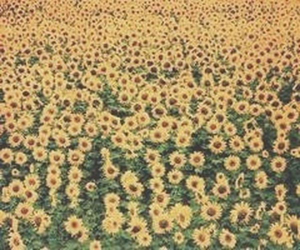 Flowers ? Stayrad