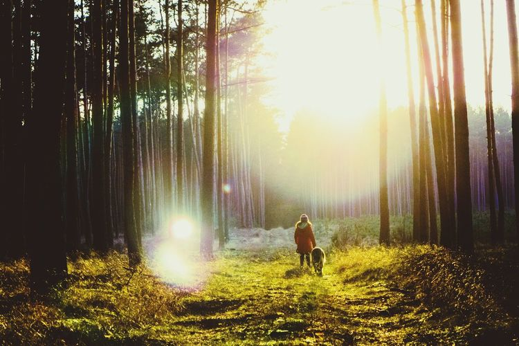 Rear view of woman walking with dog in forest