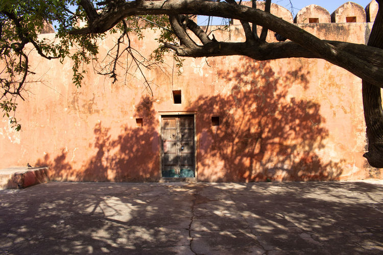 Amer fort Rajastahan Tree Architecture Built Structure Building Exterior Shadow No People Day Entrance Outdoors Branch Growth Door Sunlight Amer Fort Jaipur Rajasthan