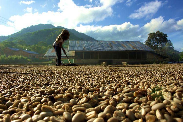 Farmer Spreading Coffee Beans On Field Against Sky