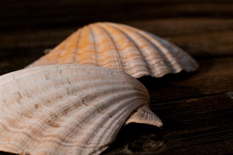 <3 Shell