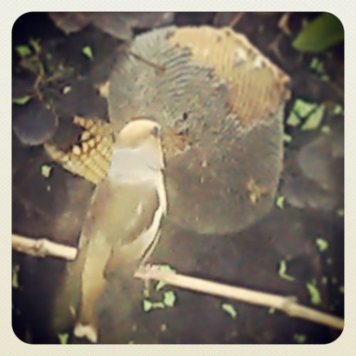 Bird France Souppes_sur_loing Like followme tagsforlikes picoftheday bestoftheday instalike like4like l4l follow4follow life instafollow likeforlike look picture pic