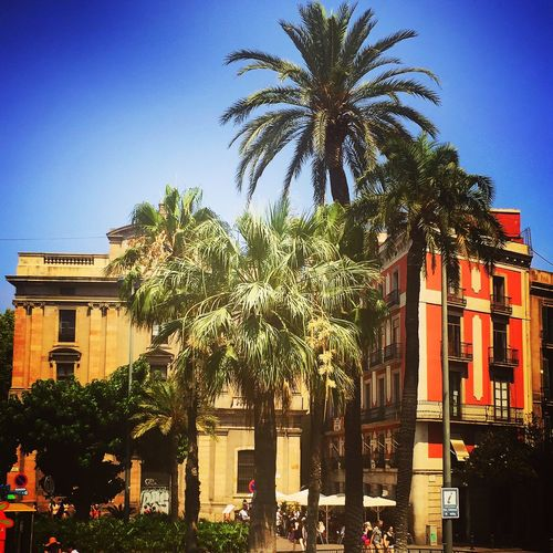 Palm Trees in Barcelona in a Beautiful Blue Sky☁ on such a Sunny Day on a Lovely Day on my Holidays Barcelona Streets
