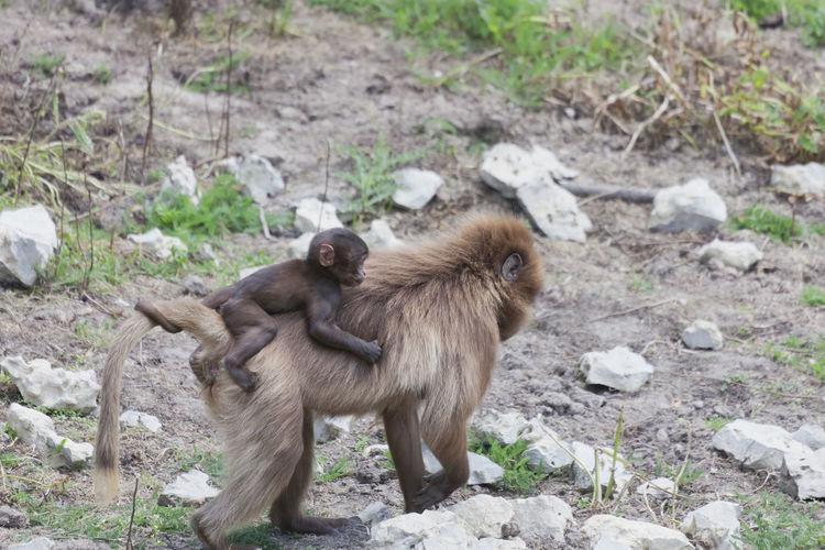 Monkey on rocks