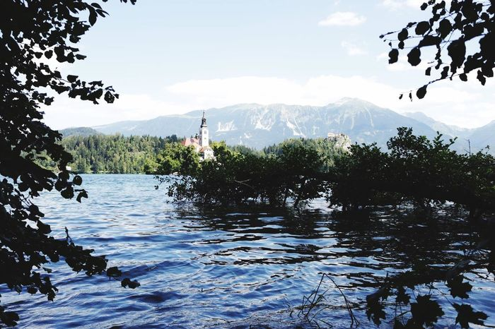 Lake Bled Fishing Carps Nature Lake Sun Summer Feeling Good Live 🎈👻Water Mountain Tranquil Scene Scenics Tree Tranquility Waterfront Sky Beauty In Nature Rippled Non-urban Scene First Eyeem Photo