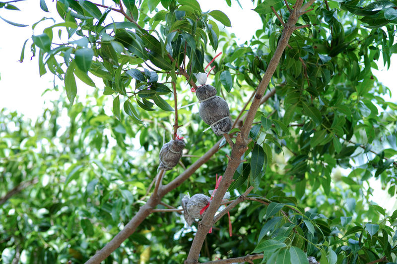 Low angle view of bird on branch