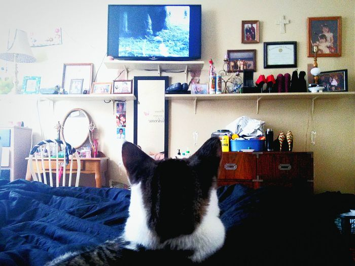 Watching animal planet You Have My Full Attention ... Favorite Show