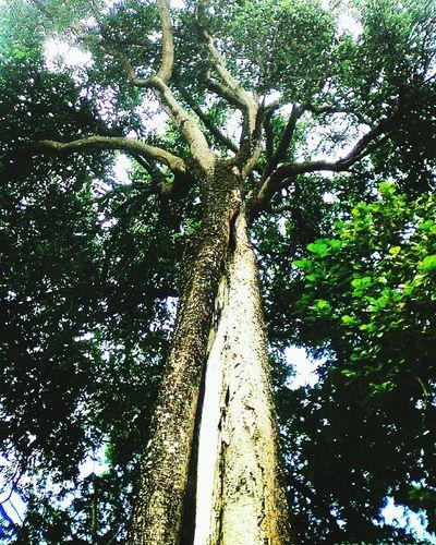 árvores, Natureza, Paisagens Naturais, Primavera Natal