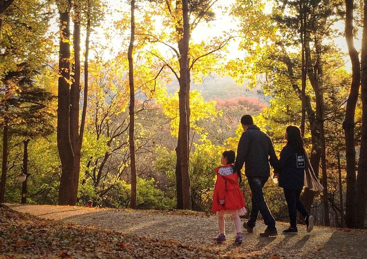 Rear view of father and son walking in forest