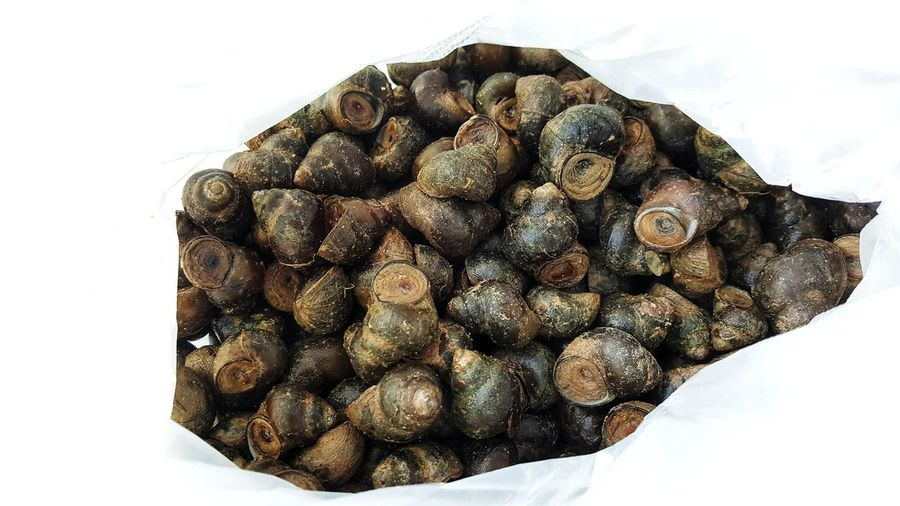 Plastic Bag Nature Natural Meal Delicious Tasty Market Shell Pond Snail River Snail Marsh Snail Food Local Tradition Rural Curry Spicy Food Asianfood Save Life Helping Make Merit Eating Menu Animal Close-up