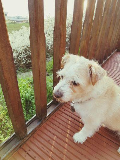 Pets Water Dog Close-up