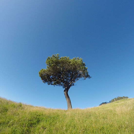 Beauty In Nature Blue Cathedral Cove Clear Sky Growth Lone Tree Tranquil Scene Tree