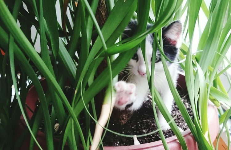 Plant Green Color Animal Themes Mammal Cat Catoftheday Cat Eyes Cateyes Playful Playful Kitten Kitten Adorable Adorable Cat
