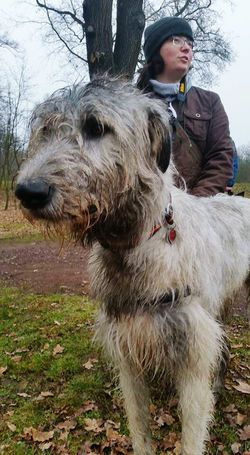 Animal Themes Outdoors Adult February 2017 Winter 2017 TreePorn Dogs Of EyeEm Dogs Of Winter Dogwalk Irish Wolfhound Cearnaigh Dogslife Looking At Camera Animal Head  How's The Weather Today? Close-up Portrait That's Me! Pets One Person Nature A Walk In The Park Herrenkrugpark