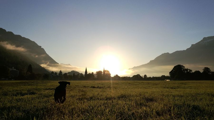 walking the dog on sunrise cityscapes Switzerland Sunlight Eye4photography  Interlaken Bernese Oberland Labrador Retriever Labrador Black Lab Sunrise Morning Light Berner Oberland Grass Morning Sunset Agriculture Mountain Field Sky Landscape Grass Area