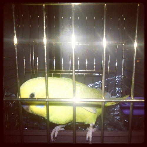 MY BIRD :)