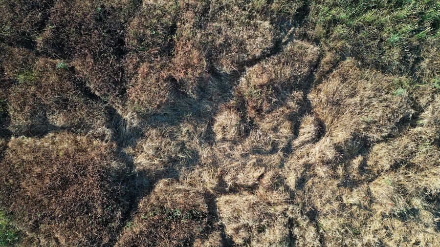 Lawn Dry Grass