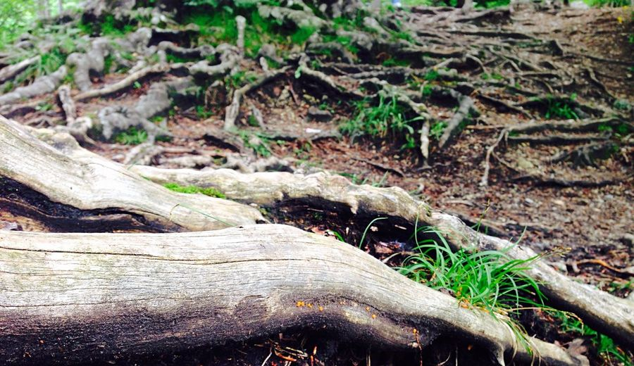Wurzeln Nature Tree Flowers Floor Forest Roots Mess Hiking Walking Around