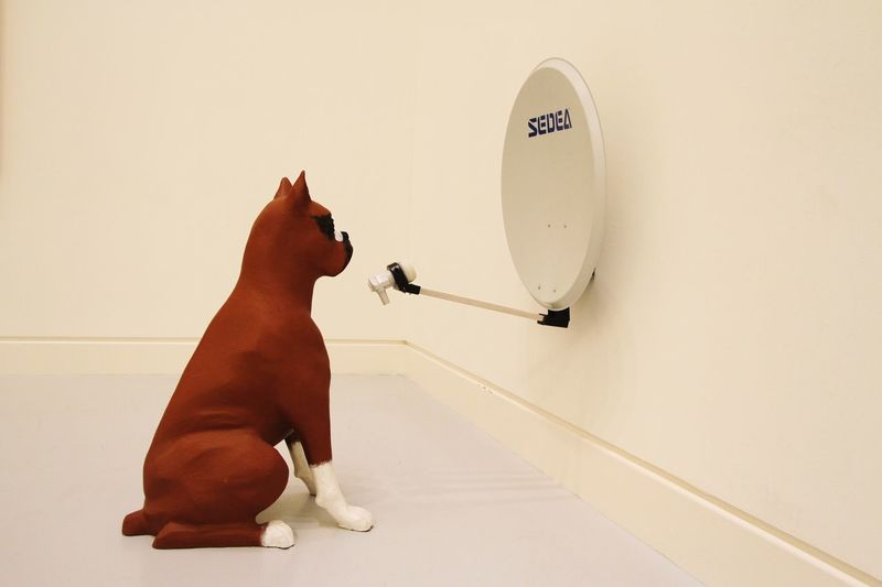 Getting Inspired Art Discovering Great Works Art Gallery Strasburg Modern Art Modernart Strasbourg Dogs Dog