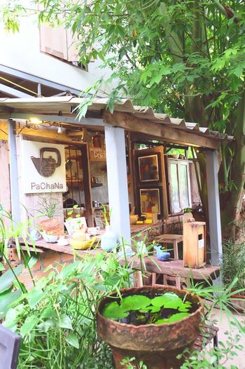 Day Outdoors Window Plant No People Building Exterior Growth Architecture Nature Tree Toilet Bowl Freshness