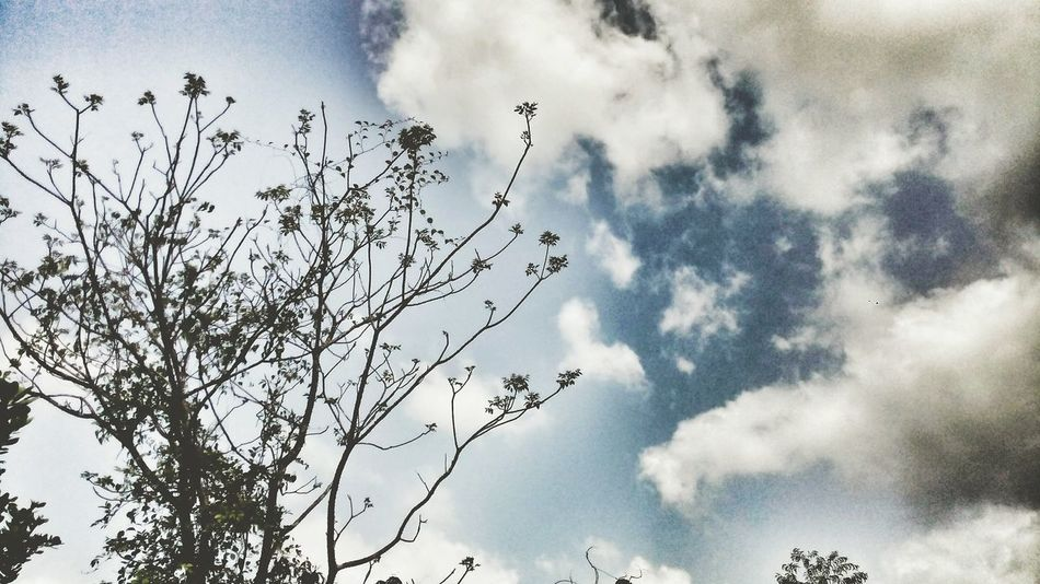 Nature Low Angle View Cloud - Sky Outdoors Day No People Tree Beauty In Nature Cloudy Day PhonePhotography Love Photography Emography Eyeemphoto Love To Take Photos ❤ Move On Eyeem From My Point Of View Live For The Story The Street Photographer - 2017 EyeEm Awards The Great Outdoors - 2017 EyeEm Awards EyeEmNewHere