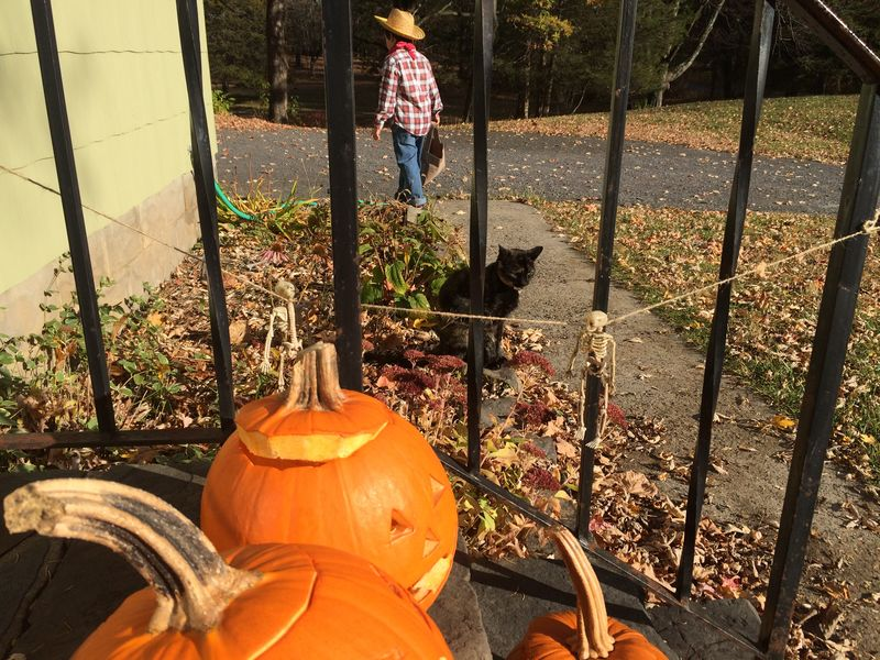 Boy Cat Costume Cowboy Day Farmer Halloween In Front Of Jack O' Lantern Low Section Outdoors Person Personal Perspective Pumpkins Relaxation Transportation Tree Trunk Trick Or Treat Trick Or Treating