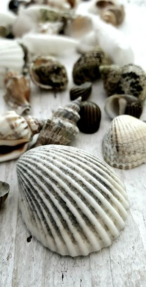 Seashells Close-up Group Of Objects Collection No People Arrangement Shells On Wood Shells🐚 Shell Seaside Marine Coast