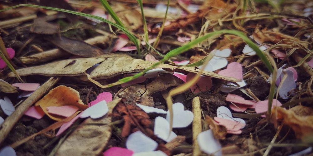 hearts Green