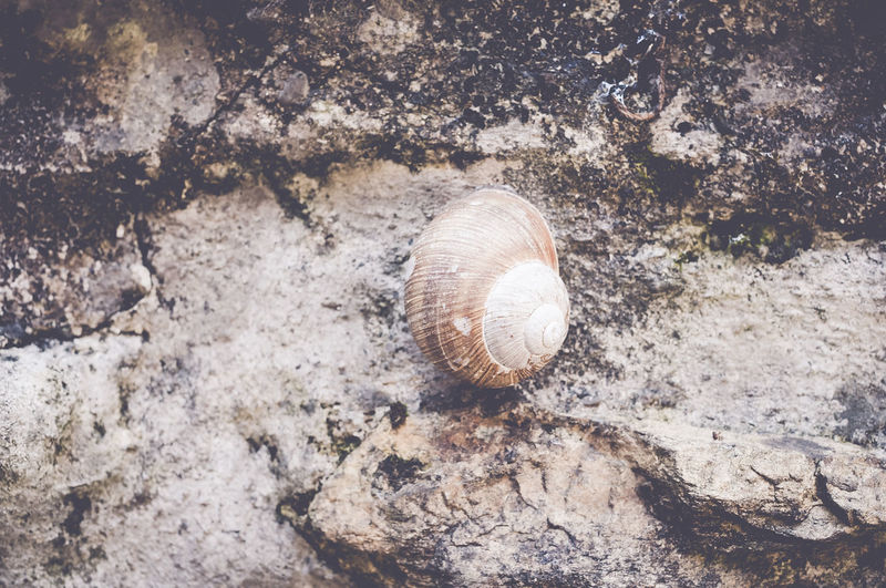 High angle view of snail on rock formation