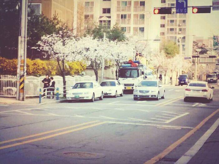 봄이었을때우리동네:)