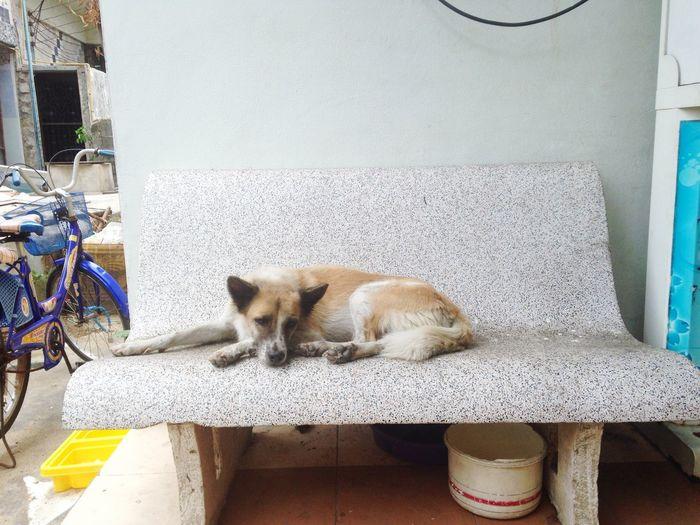 Sleep on the rock bench Thai Street Dog Sleep Thai Dog Wat Suan Kaew Mid-day