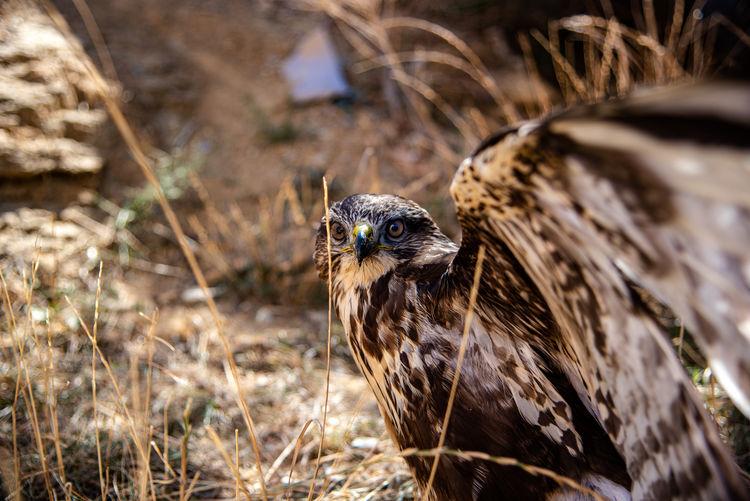 Close-up portrait of a bird on field