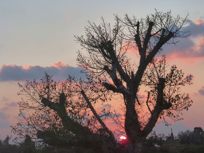 Silhouette tree against sunset