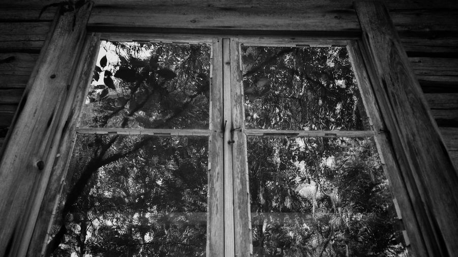 Window From My