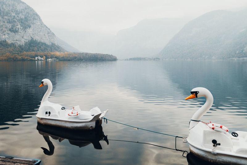 Water Lake Swan No People Boat Winter Melancholy Melancholic Landscapes Cold Days