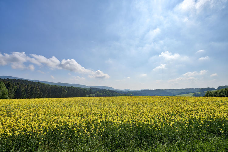Saxony Saxon Switzerland Saxon Switzerland National Park National Park Nature Landscape Panorama Spring Springtime Season  Plant Scenics - Nature No People Beauty In Nature Outdoors Rapeseed Sky Tranquility Land Field