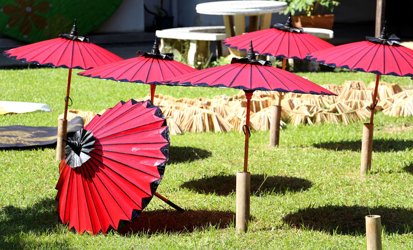 Color Red umbrellas are indigenous handicrafts in Thailand. Business Thai Thailand Travel Summer Holiday Health Healthcare Lifestyle Lifestyle People Handmade Handicraft Craft Art Art And Craft Indigenous  Light And Shadow Colorful Relax Recreation  Shelter Protection Grass Beach Umbrella Umbrella Entertainment Tent Hand Fan Foldable Sunshade Sun Lounger