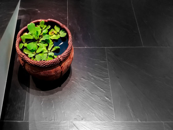 Classic Mini Pond in a Lovely Evening Baked Clay Close-up Day Freshness High Angle View Indoors  Leaf Mini Pond Nature No People Plant Tropical Climate Tropical Water Plant