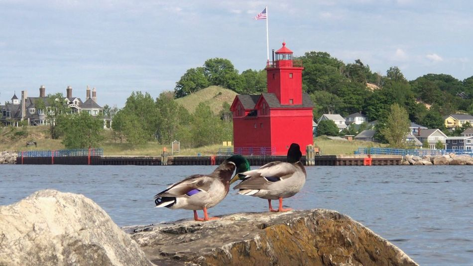 Bird Water Architecture Animal Themes Animals In The Wild Built Structure Day Building Exterior Sky Sea Outdoors Animal Wildlife Nature Seagull No People Perching Beauty In Nature City Lighthouse Lighthouse_lovers Lighthouse_captures Lighthouses Of Lake Michigan Lighthouses