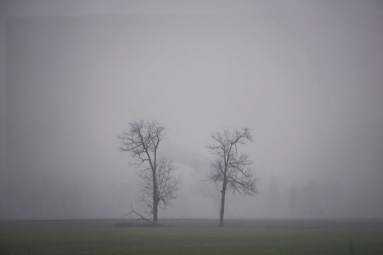Bare tree on field in the fog